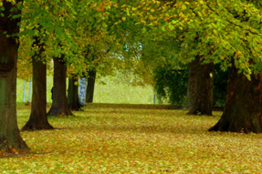 Header_autumn_half-term 2009