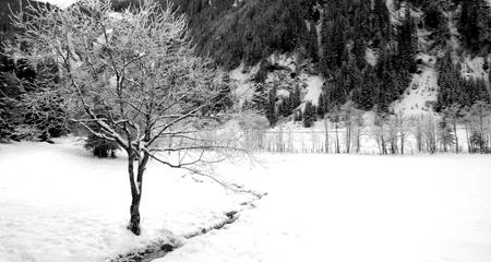 Huettschlaf tree